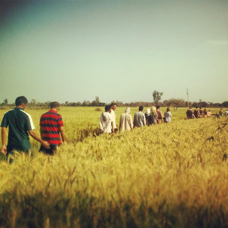 Walking the fields of gold.